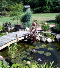 pond-through-the-winter-what-to-look-for-water-plants-and-fish-0-2060385475