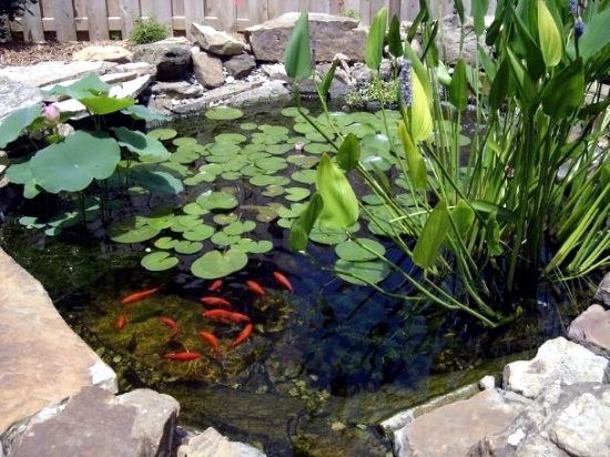 Pond through the winter what to look for water plants and for Outdoor goldfish pond ideas