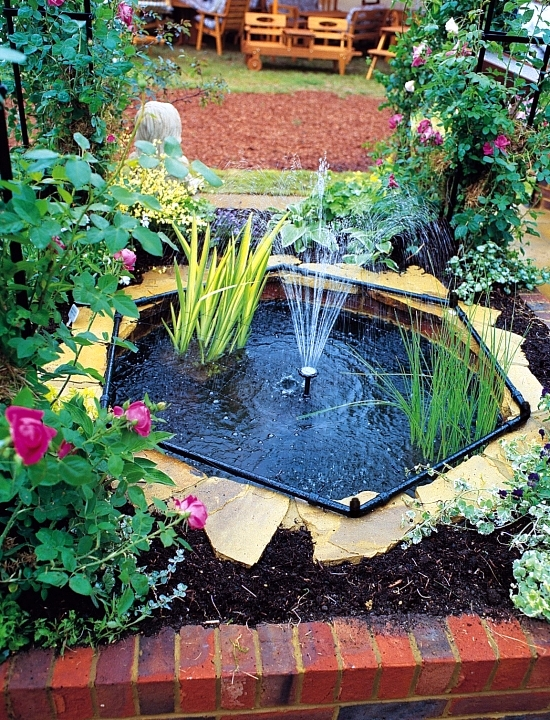 Pond through the winter-what to look for water plants and fish