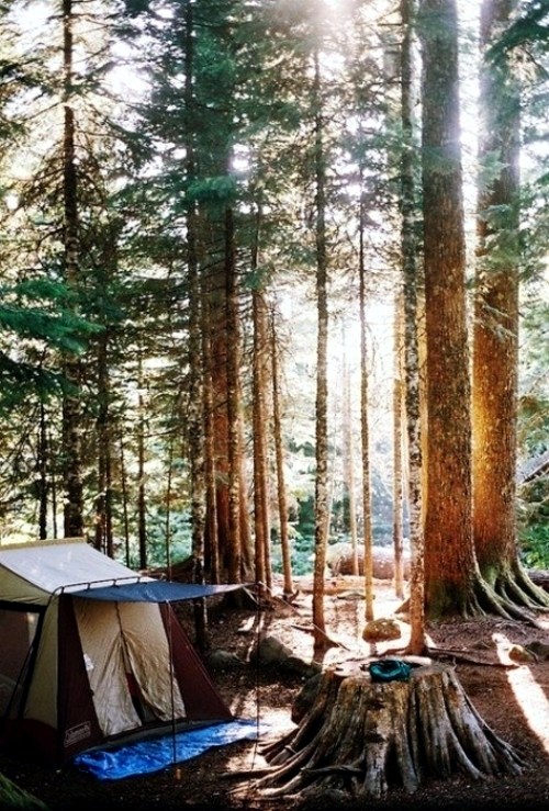 Select the camping tent - useful tips before you go camping