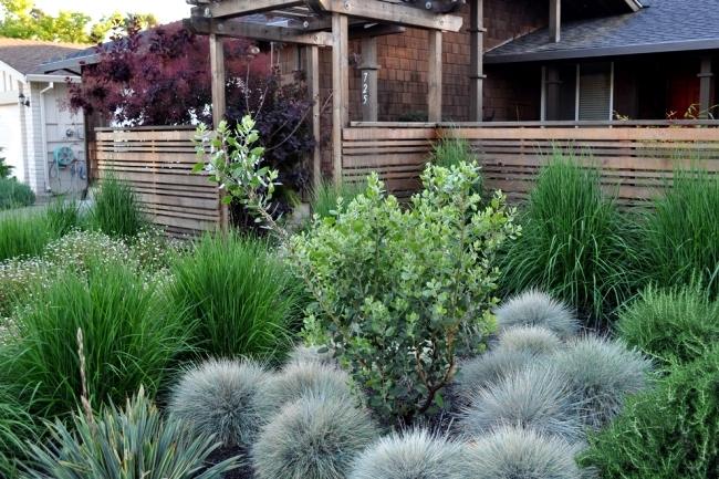 Suitable for rock garden plants: the Blue Fescue
