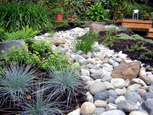 Suitable for rock garden plants the Blue Fescue – Plants for a Rock Garden