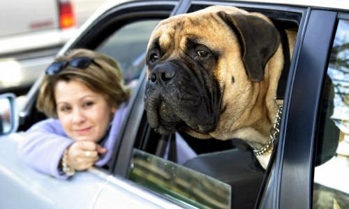Summer Pet Plan - Helpful tips for organizing