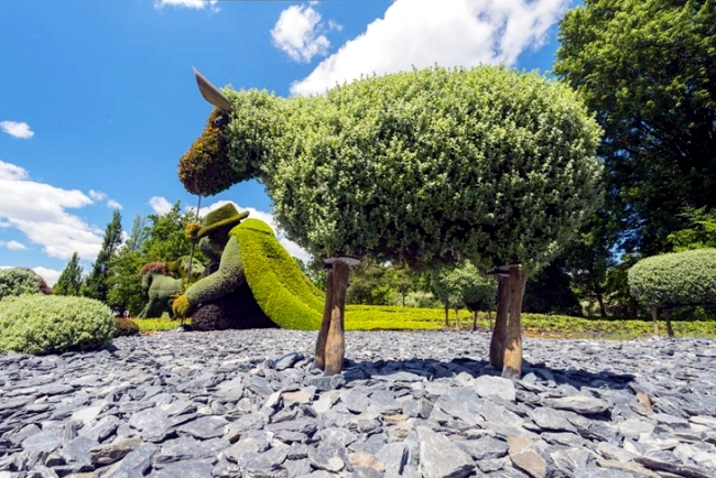 Sustainable Garden Art: Garden fascinating sculptures of plants