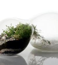 terrarium-designs-serve-as-decorative-mini-garden-in-the-interior-0-1443052613