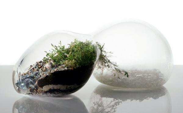 Terrarium Designs Serve As Decorative Mini Garden In The Interior