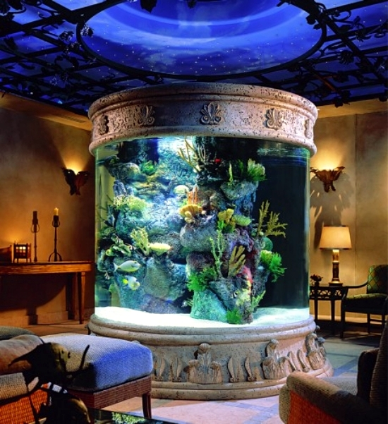 Aquariums Round Are Very Well Suited To Serve As Decorative Items And In Most Cases
