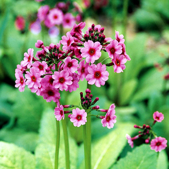 The best plants for a water garden - 15 flowers for planting