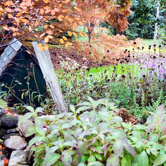 The garden in autumn - Autumn tips and ideas for your landscape