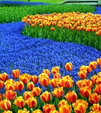 the-most-beautiful-holiday-destinations-in-the-spring-keukenhof-garden-0-1993965006