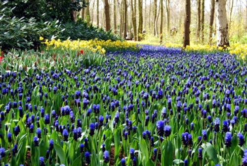 The most beautiful holiday destinations in the spring - Keukenhof Garden