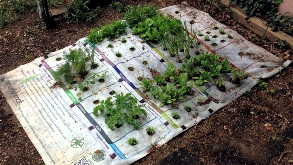 The Nourishmat mini garden project ünterstützt a healthy diet