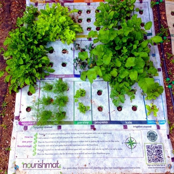 The Nourishmat mini garden project ünterstützt a healthy diet