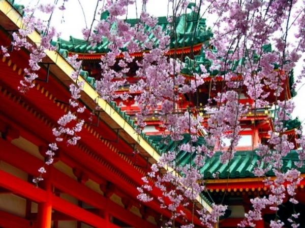 The Sakura Flowers In Japan Watch A Dream Vacation In The Spring - Vacation in japan