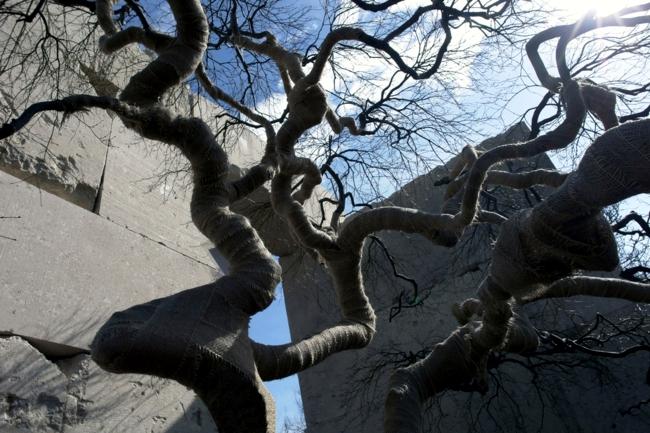 Tree Museum in Switzerland is home to over 2000 species of trees