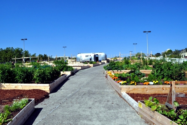 Urban Gardening - an important part of urban planning and development
